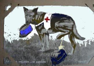 Røde Kors hund toner ren hat